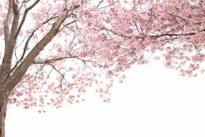 春は入園・入学のシーズン